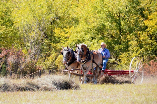 Ralph Anderson of Council Grove will have his team of draft horses helping mow and rake prairie grass to stack and bale into hay during the special farming demonstrations at the High Ground Museum open house and hay day Saturday, Sept. 21, northeast of Council Grove, from 10 in the morning until 4 o'clock in the afternoon