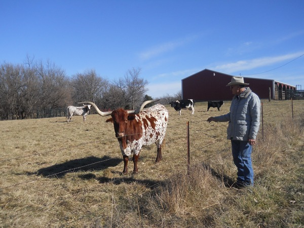 Larry and Sandy Browning and their family at the Circle B- near Emporia have raised registered Longhorn seed stock for a number of years collecting awards at several competitions.