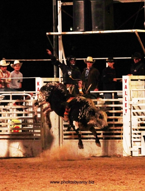 D.J. Shields, Humboldt, Kansas, native now rodeoing out of Wynnewood, Oklahoma, shows his championship form winning the Brent Cushenbery Memorial Bull Riding last year at Manhattan. Shields collected $2,520 for marking 87 points on 623 Price Sheriff, owned by Jimmy Crowther of Roxbury.