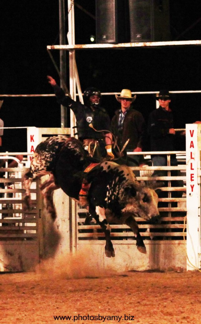 D.J. Shields, Talala, Oklahoma, was champion of the Brett Cushenbery Memorial Bull Riding at Manhattan. He rode the bull called Price Sheriff from the New Frontier Rodeo Company, Roxbury, to score 87 points and receive a check for $2,520.(www.photosbyamy.biz)