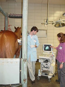 Ultrasound is a useful diagnostic tool for diagnosing colic in horse.