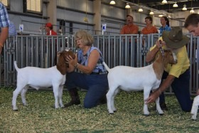 Carol Ann Bachofer and Art Howell of Mulberry Meadows Ranch at Brookville show their champion Boer goats at the Kansas State Fair in Hutchinson.