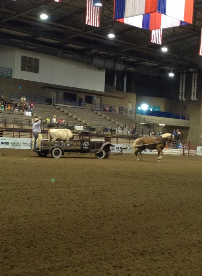 """This flatbed truck does not contain a motor, but it has plenty of horsepower when the  big Belgium gelding called Bob pulls the depression era vehicle as Ralph, a Longhorn bull with a 74-inch horn spread, rides behind, and Soda Pop, a miniature pony, is seated beside driver Cody McGee during """"Cody's Roundup."""""""