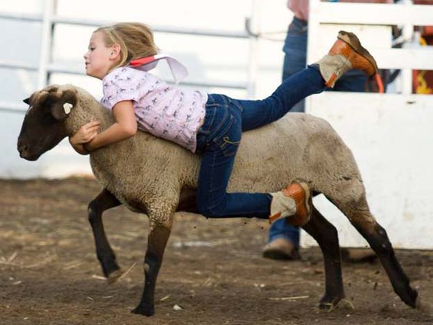 There'll be Mutton Busting at 7 o'clock, Friday and Saturday evenings, Aug. 14-15, to start western action before the annual Eureka Pro Rodeo, 8 o'clock, at the Eureka, Kansas, Saddle Club Arena. (Courtesy photo.)