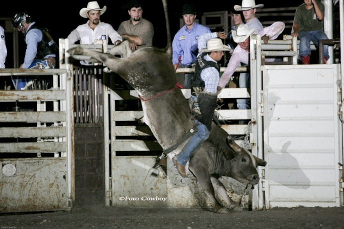 Grey Squirrel brought fame to the New Frontier Rodeo Company at Gypsum and his sons and grandsons continue the bucking bull tradition. (Photo by Kent Kerschner, Foto Cowboy.)