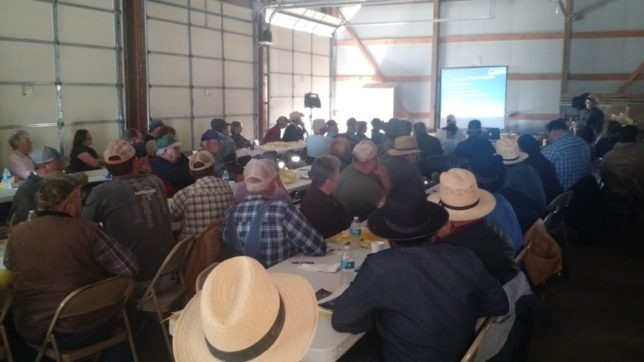 More than 100 cattle producers from eastern Kansas and western Missouri attended the Grazing Management Workshop, at the Frank Graham farm west of Garnett, to hear Dr. Jaymelynn Farney, southeast area Extension beef systems specialist,  discuss opportunities of integrating livestock and cropping systems. (Photo courtesy of Rod Schaub.)