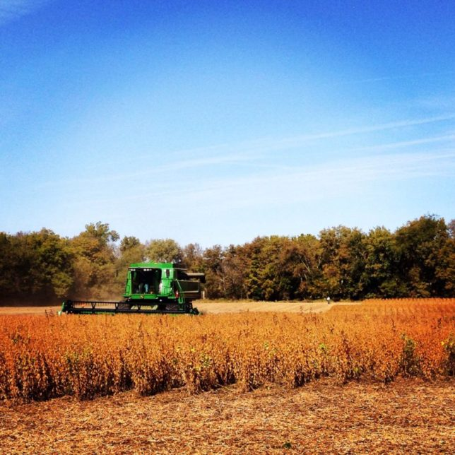"""The """"best soybeans"""" Raylen Phelon has ever produced at Phelon Farms yielded 68 bushels an acre last year."""