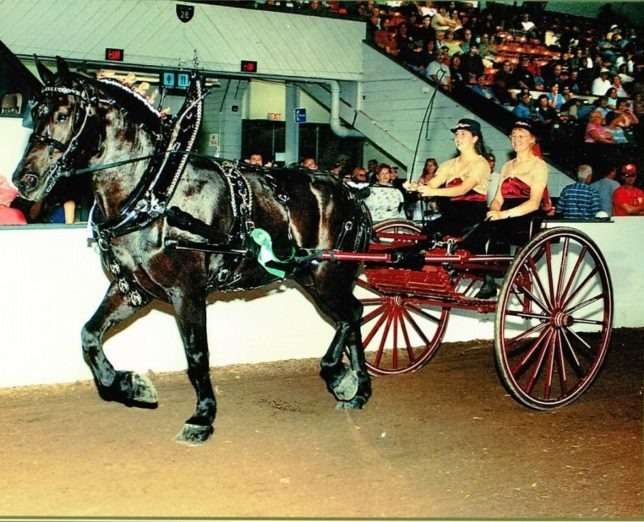 Lauren Schiller is on the lines of the Percheron called Buster in a hitch class at the Eastern States Draft Horse Show.