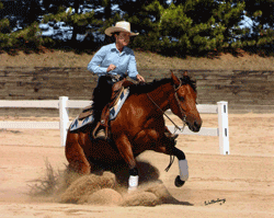Dr. Kristina Hiney, equine nutritionist and exercise physiologist, is a member of the American Quarter Horse Association and the National Reining Horse Association.  She trains and shows her own reining horses.