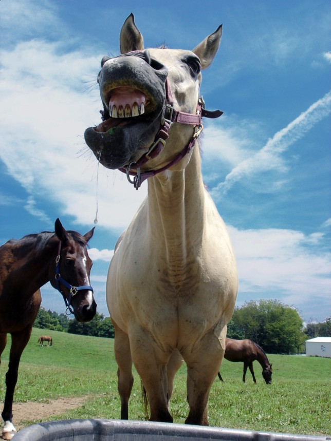 Spring health checkup is an ideal time to have a horse's teeth checked by a veterinarian or equine dentist.