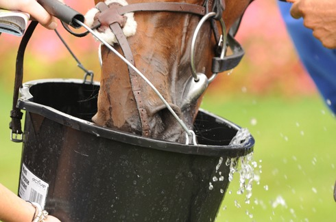 Cool clear water at all times is the most essential nutrient for horses.