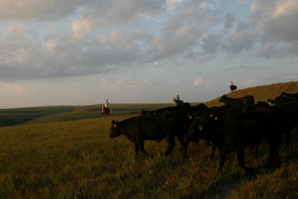 A ranch rodeo, ranch horse competition, barbecue, Run for the Brand, golf tournament, and Ag Olympics are just a sampling of attractions for the Flint Hills Beef Fest this weekend Friday through Sunday, Aug 19-20-21, at Emporia.