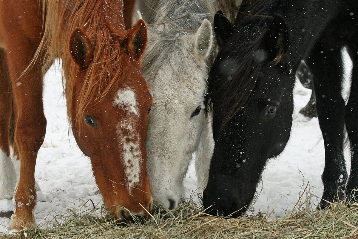 A Bureau of Land Management has recommended euthanizing a portion of 45,000 wild horses and burros being kept in holding facilities across the country if they cannot be adopted to new owners.