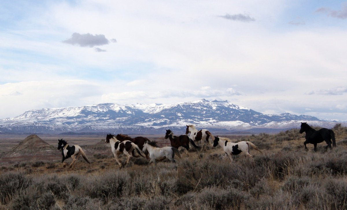 More than 75,000 horses and burros are protected by the Bureau of Land Management on government lands that can support only 27,000 horses.