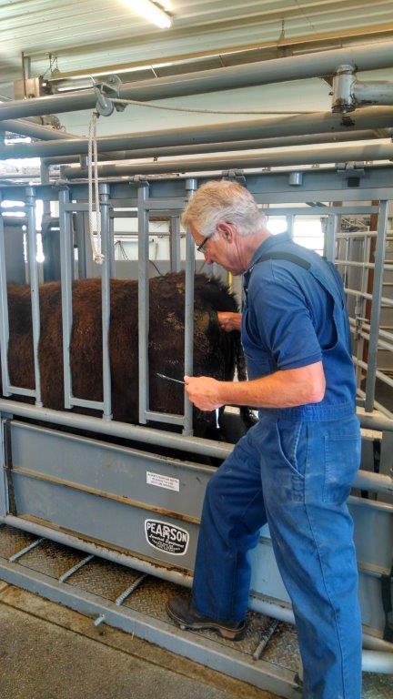 veterinarian-of-year-at-work