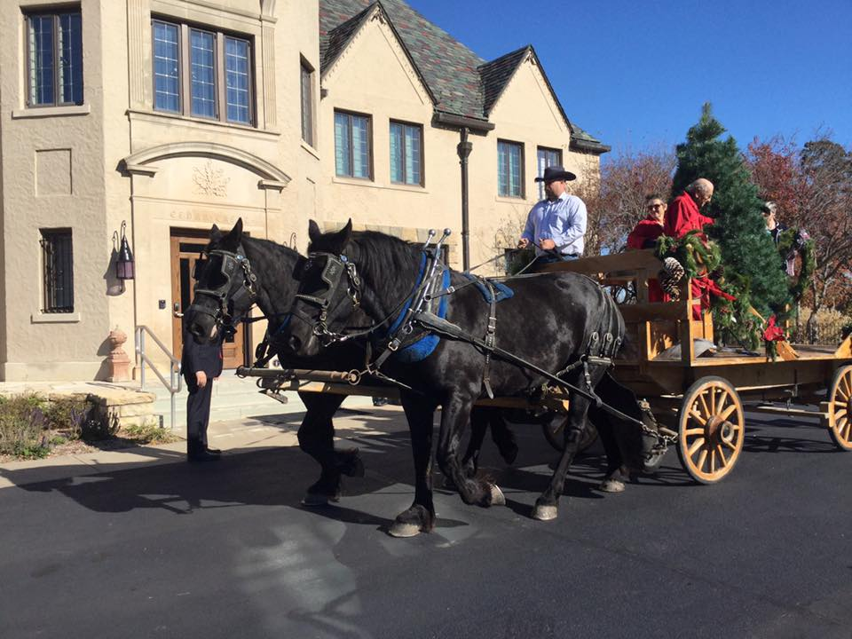 Gov. Sam Brownback's Christmas tree was delivered to Cedar Crest by Robert and Cecil Carter of 3C Carriage Service at White City, magnificent matching Percherons, Betty and Bess.