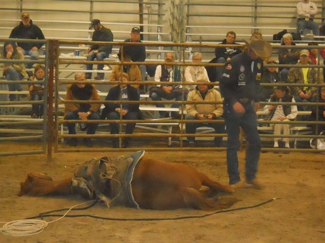 Upon request from spectators during a horse handling seminar at the Topeka Farm Show, Scott Daily demonstrated how he can calm and gain respect from young horses by laying them down, making them more trustworthy and responsive to further training by the Arkansas City cowboy.