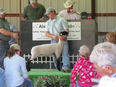 Abeldt Club Lambs hosts an annual prospect auction at the family farm near Hope. Joe Abeldt opens the gate to let the lots in, and they are posed by Austin Abeldt, as Josh Abeldt reviews the offering from auction box before Col. Danny Davis cries the sale. Aaron Abeldt (not shown) assists in collecting bids at ringside.