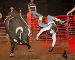 Tiffy's Wink is just one of the bucking bulls best known for throwing cowboys at bull riding events contracted by McDonald Rodeo Company of Ava, Missouri.