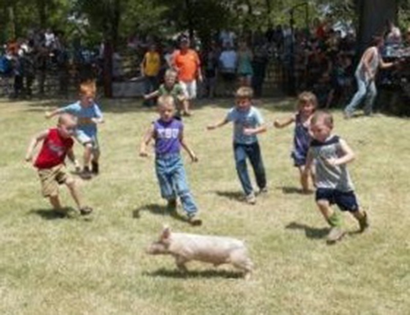 greased pig 5 and under -