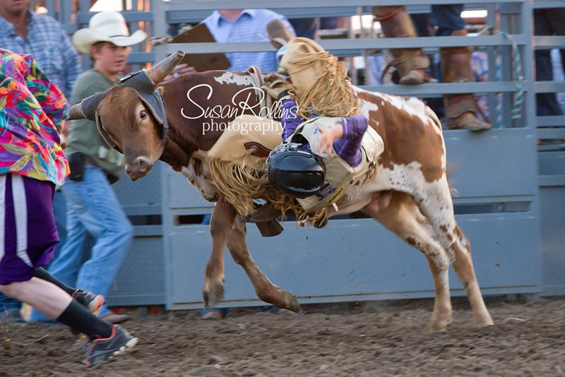 mini bull riding 10443258_10152576636549544_4819972555512355336_o[1]