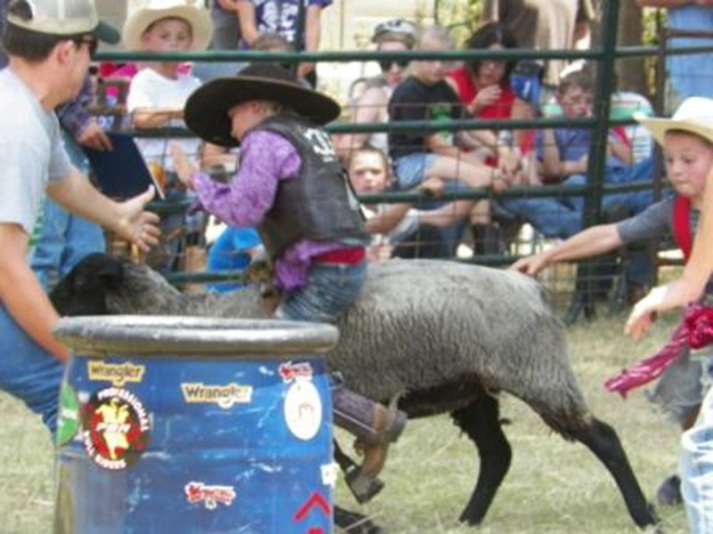 mutton busting - Copy