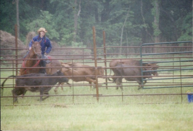 Versatility is required of all horses owned by Lauren Schiller, as she's shown cutting cattle on her sorrel breeding stock Paint mare Sweetie in an Ultimate Horseman's Challenge Association competition.