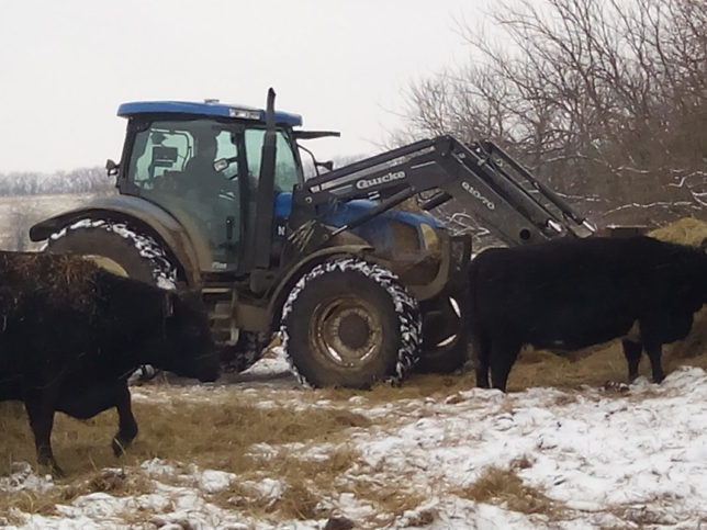 Adam Phelon was out in blizzard conditions feeding hay to the Phelon Farms' stock cowherd Thursday morning near Melvern in Osage County. Haying is a family job with Adam and his mom Karen and sister Emily handling much of the swathing and baling chores each year.