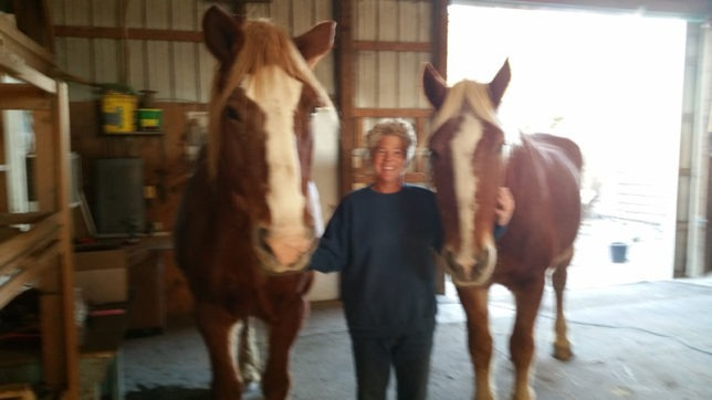 Brenda Grimmett has assisted all kinds of horses, every shape, size, color, disposition, age and level of handling one could imagine, as she worked with abused, neglected and unwanted horses at B&C Equine Rescue, Inc., Carbondale, which will host a Help A Horse Day Frenzy Sunday, April 24.
