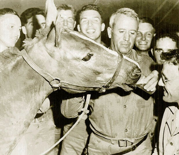 Reckless, a  horse serving in the U.S. Marines during the Korean War, shares a beer with Marines from the 5th Regiment, 1st Marines. The horse lived at Camp Pendleton until her death in 1968. (Photo courtesy of Col. Richard B. Rothwell, USMC retired.)
