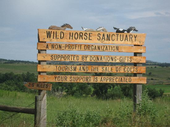 Wild horse sanctuaries managed by the Bureau of Land Management are filled, adoptions are low, and roundups have decreased.