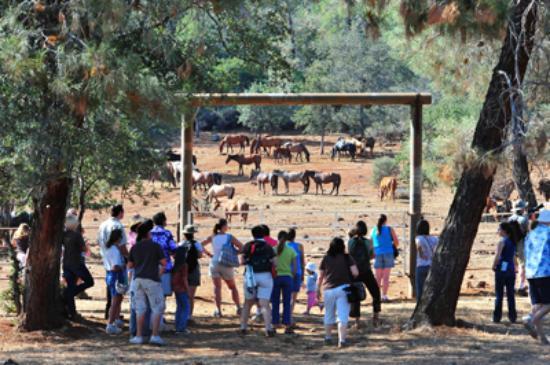 wild-horse-sanctuary1